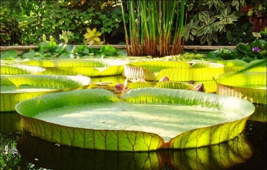 Garden of Spellls