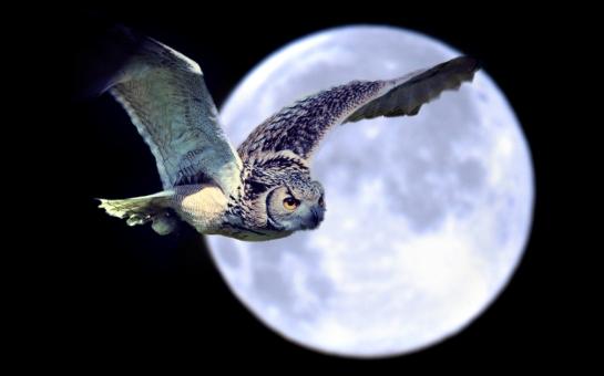 Moon Magic - Garden of Spells